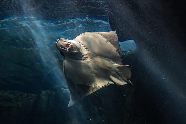 Aquarium of the Pacific_031316