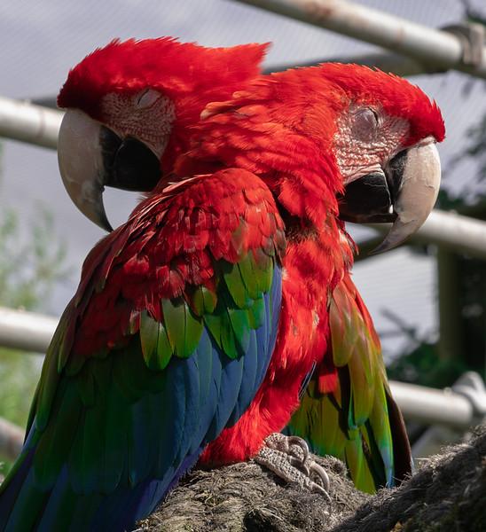 Parrots at Blåvand Zoo