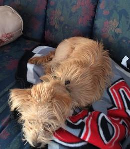 2014 03-01 Amherst Humane Society trip