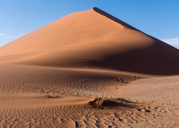 Desert Adapted?