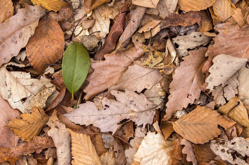 Leaves nwm-.jpg