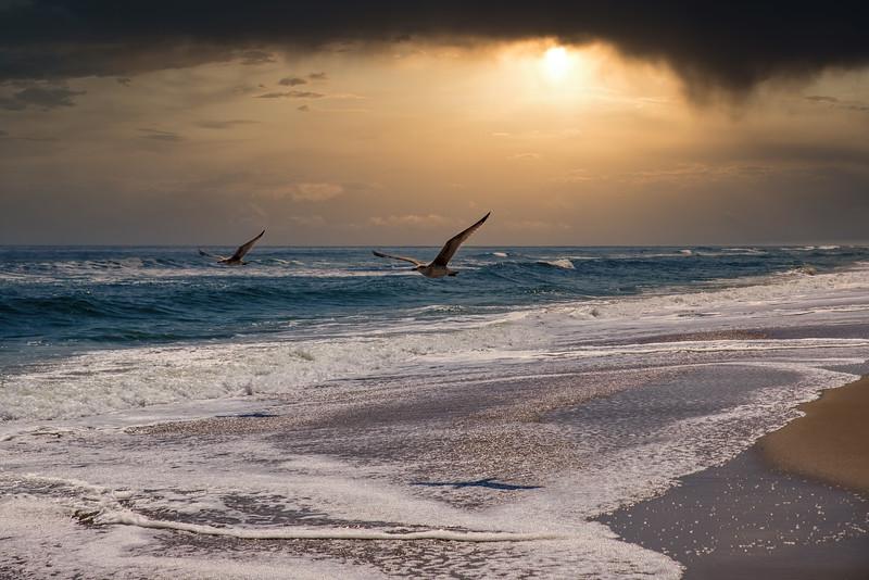 SeagullsDamNeck-001