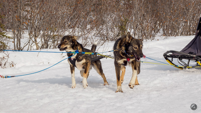 20190325_Blaire_and_Liz_Mushing_30.jpg