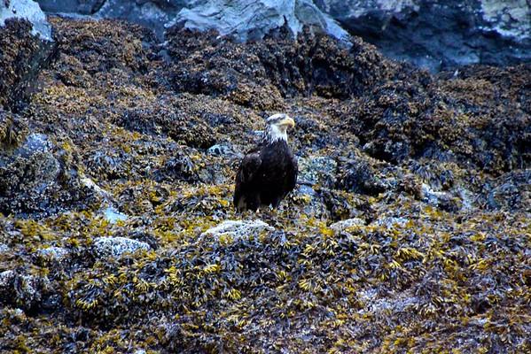 Patterson Bay - Baranof Island, Alaska