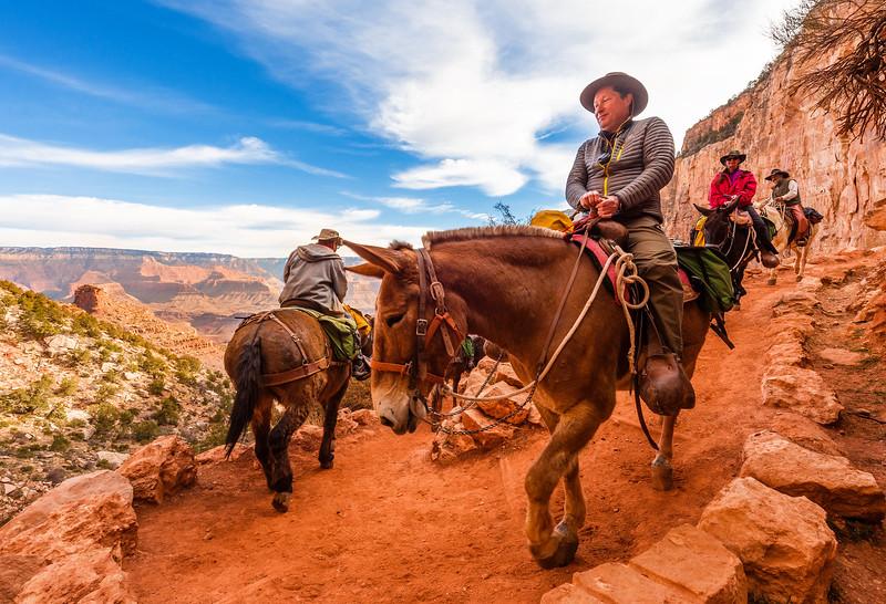 grand-canyon-mule-ride.jpg
