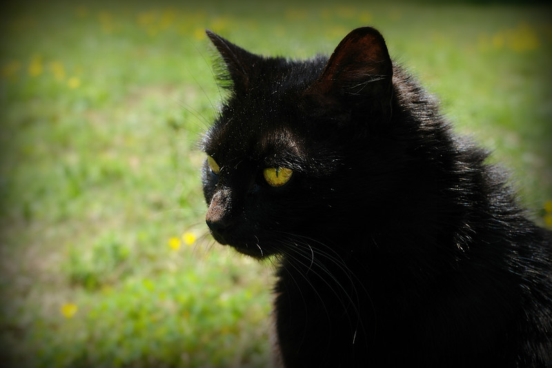 Again, I was trying to take pictures of the tiny buttercups in the yard and BG kept getting in the way.  She's so needy.