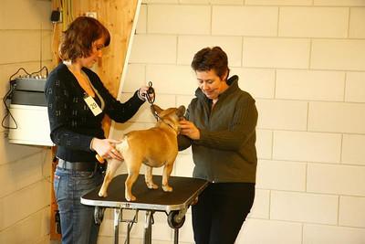 Jonge Hondendag ~ januari 2008