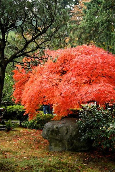 Portland Japanese Garden  11-11-11  3548.jpg