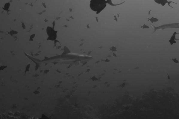 2007 Palau & Yap Webshots