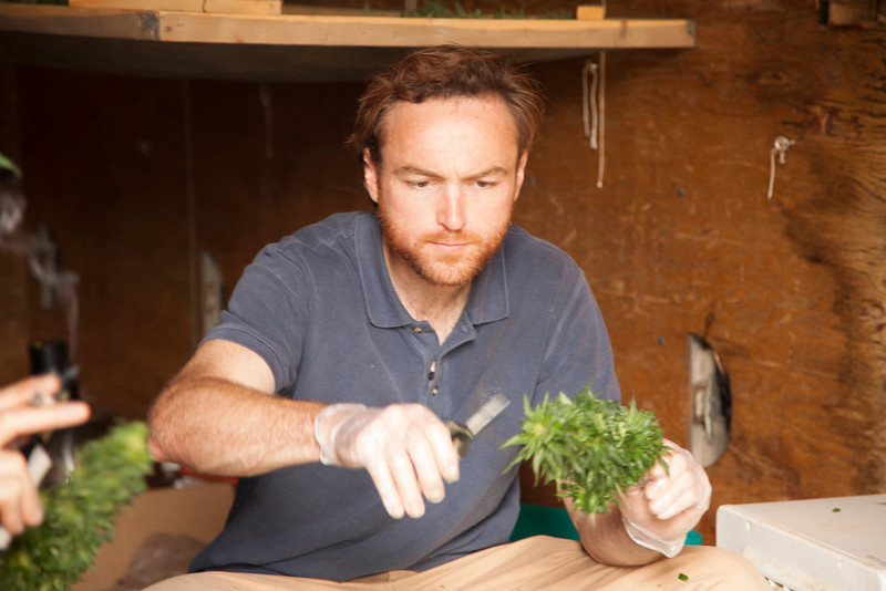 ". Matt Shotwell trims some of BE Smith\'s product in ""Weed Country\"" on Discovery Channel."