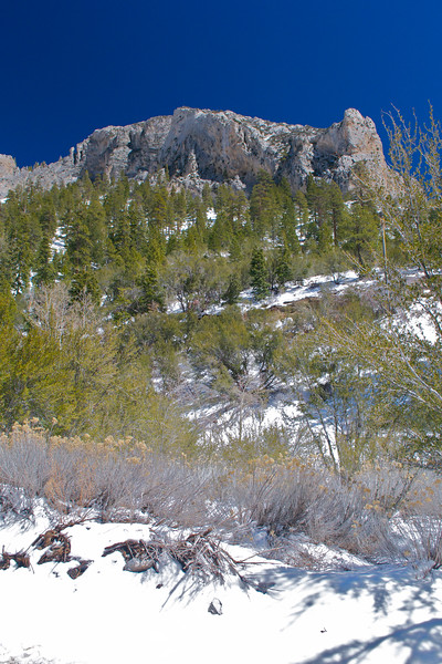 Mojave Desert & Red Rock Canyon, Vegas-DSC_2190-067.jpg