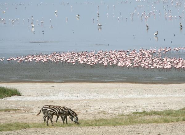 Lake Manyara Tanzania 2006