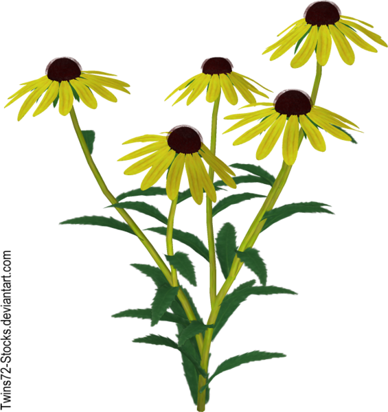 flower_10_by_twins72_stocks-d4jki1q.png