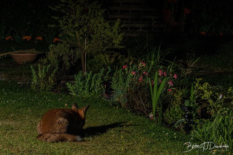 Garden Night Shoot-7276.jpg