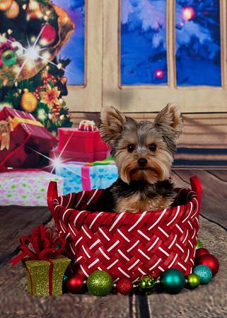 Lakeland Hills Pet Pros Santa