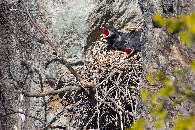Ravens Nest-8230.jpg