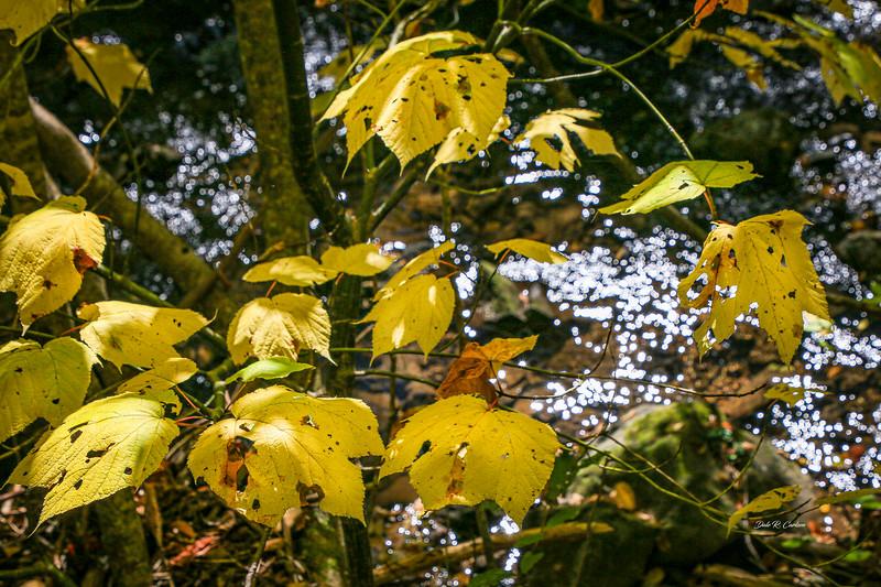 Leaf Lights