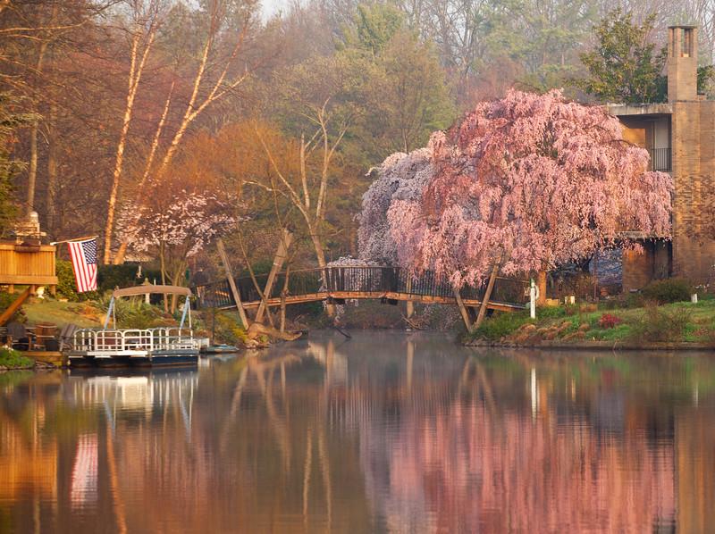 Van Gogh Bridge with cherry blossoms at sunrise
