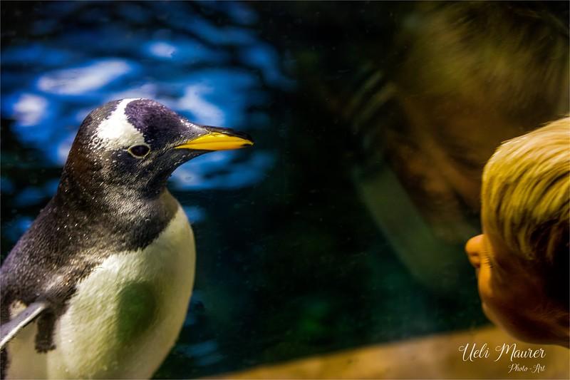 2016-10-05 Zoo Basel0U5A0623-Bearbeitet.jpg