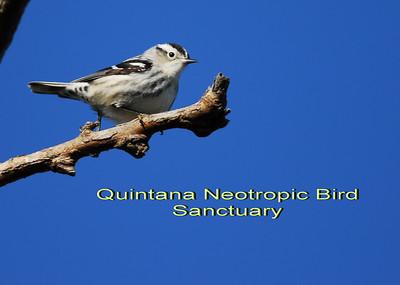 Quintana Neotropical Bird Sanctuary, Freeport, TX
