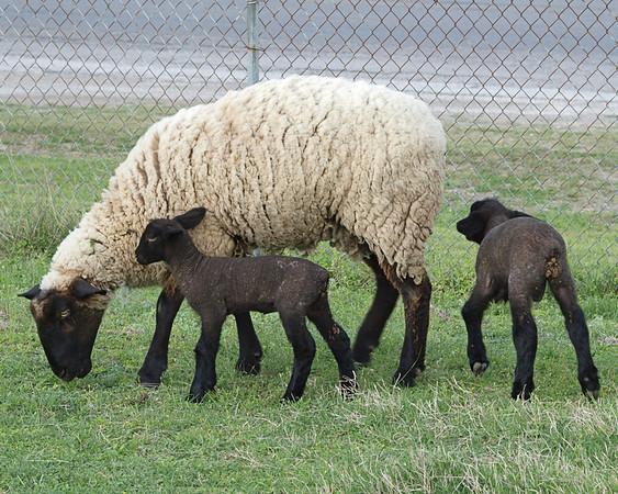 Easter Weekend Fauna 3.4.2010