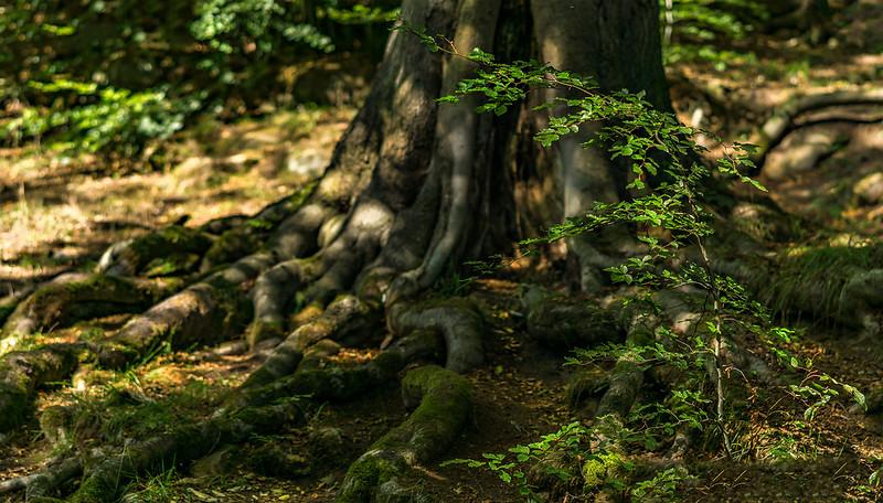 Forest Shadows-141.jpg