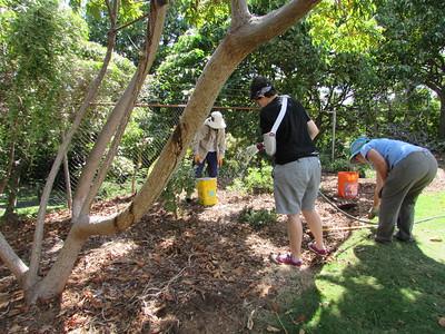 2016-10-18 Maui Nui Botanical Garden