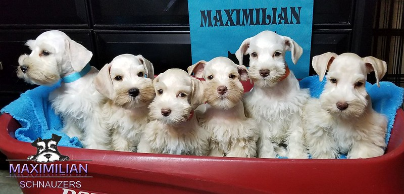 Bianca Pups 027.jpg
