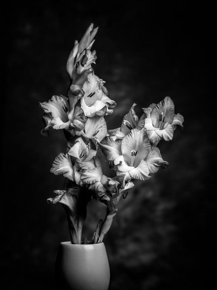 菖兰花,黑白感受