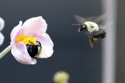 Bees Busy