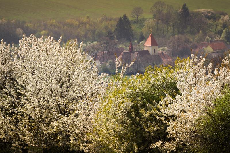 Moravian spring