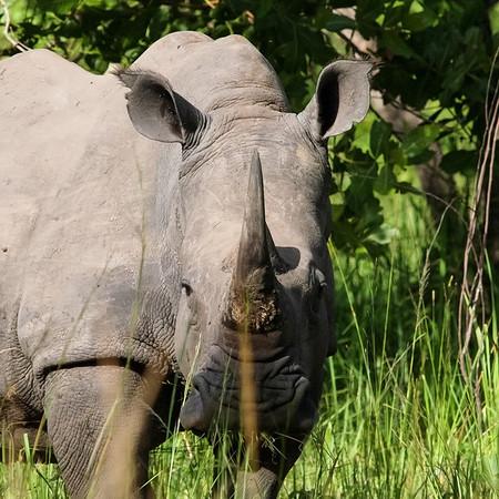 Rhino Portraits