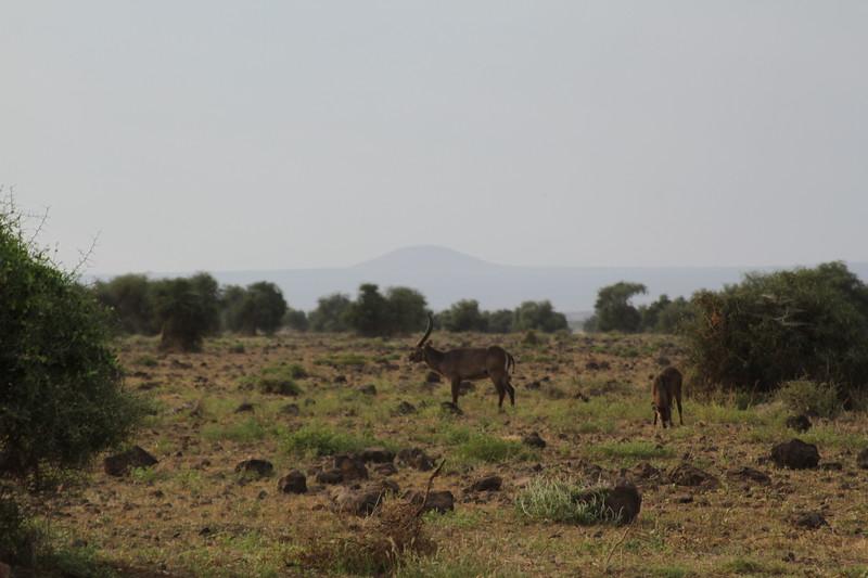 Kenya 2019 #2 247.JPG