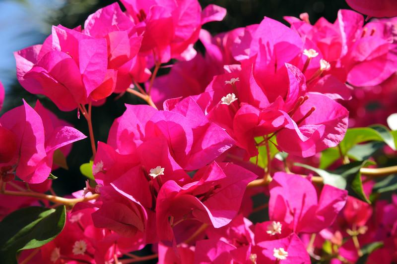 20110816_Nature_060.jpg
