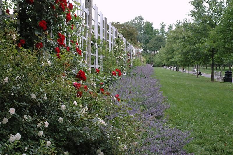Brooklyn Botanical Gardens 082.jpg