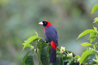 2016 March 22-30 - Nicaragua Bird Tour