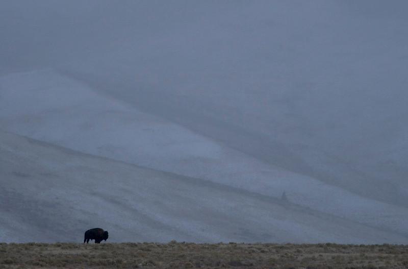bison-hills.jpg