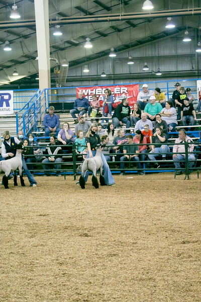 OYE Champions Tribute Sheep and Goat Showback 3/16/2021