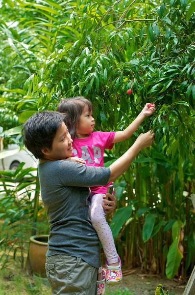 PF picking the Lychee from the tree!!