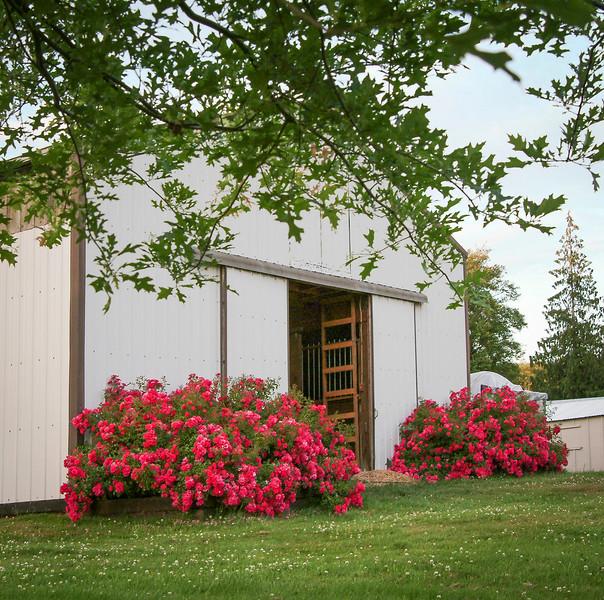 29farm 7 13 rose barn.jpg