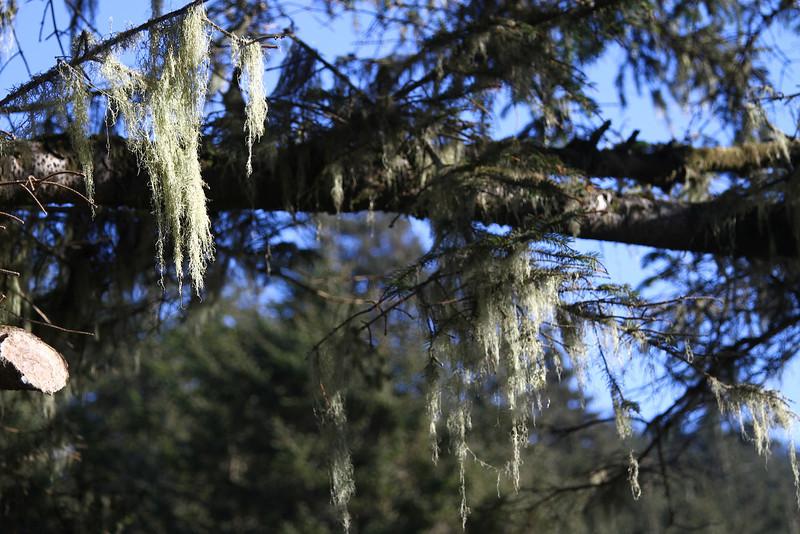 The lichens were gorgeous.jpg