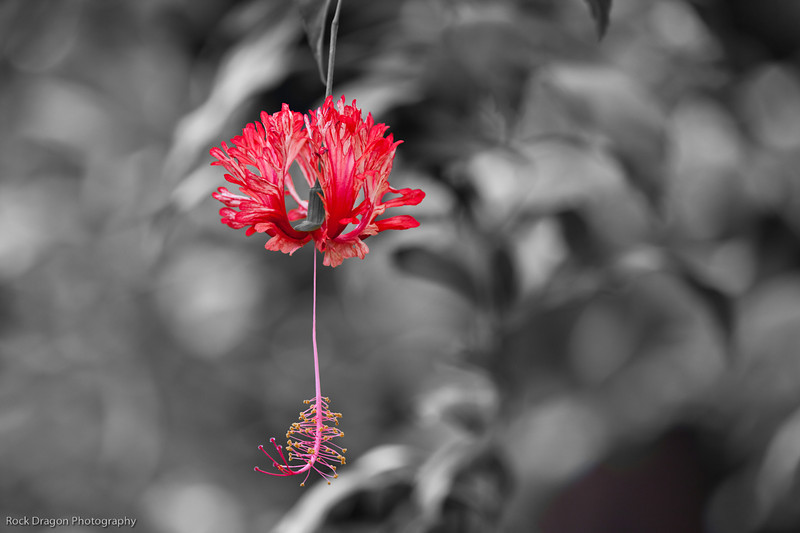 Flower, Calgary Zoo, June 22