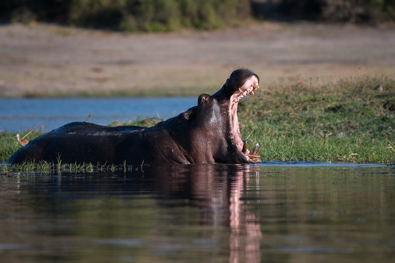 Botswana_June_2017 (5945 of 6179).jpg