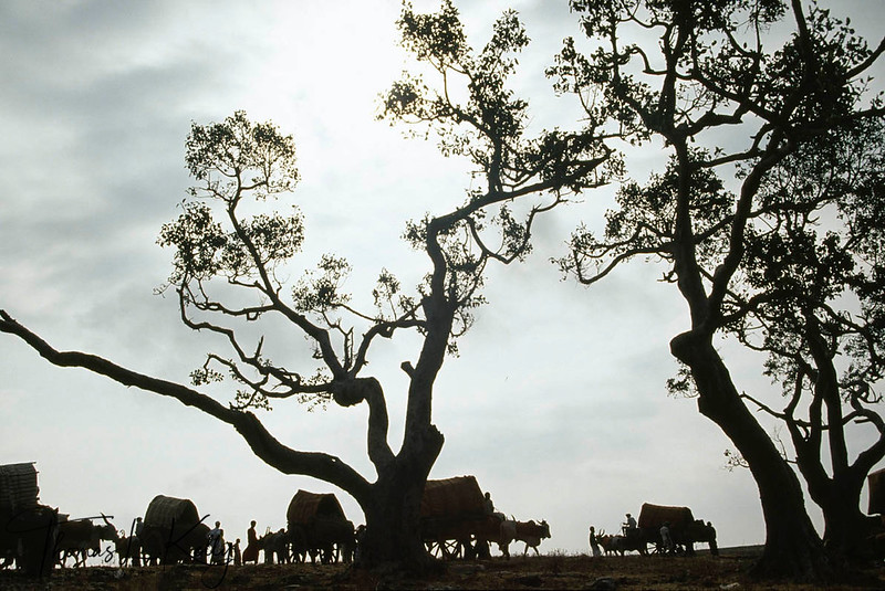 """Silhoutted against the Karnataka sky, hirijans flock in their bullock-driven covered wagons to the festivel of """"The Mother"""" Yellama."""