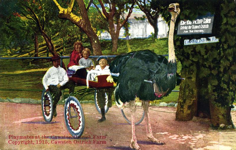 Ostrich Farm Playmates