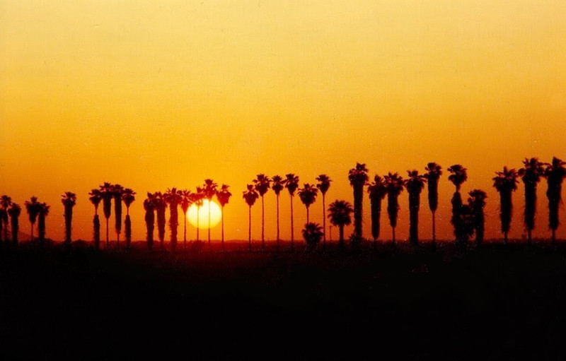 Palm Sunset, Yuma, Arizona, march 1990.jpg
