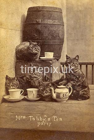 Victorian photo album filler cards