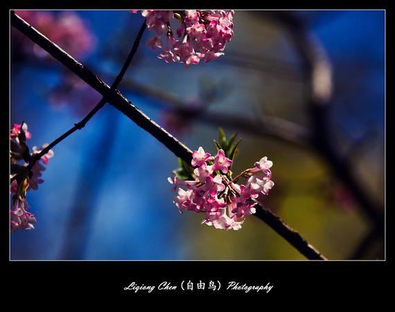 _MG_0534-M.jpg
