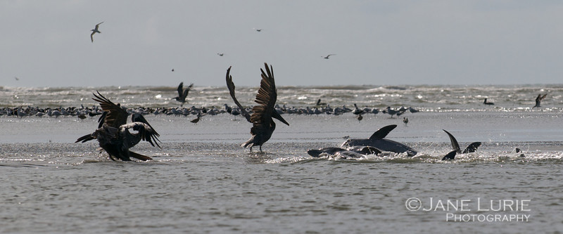 Dolphins 9.14.12