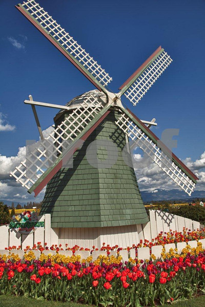 Windmill, Rosa Garte 0933_HDR.jpg